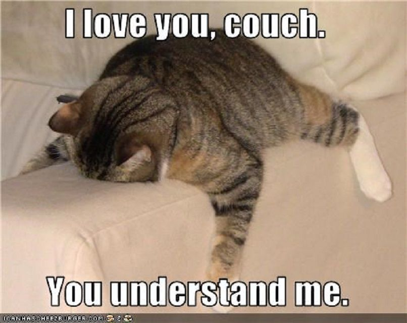 the 12 funniest cat memes on the planet