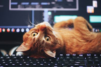 Red Ginger Cat on Computer Keyboard