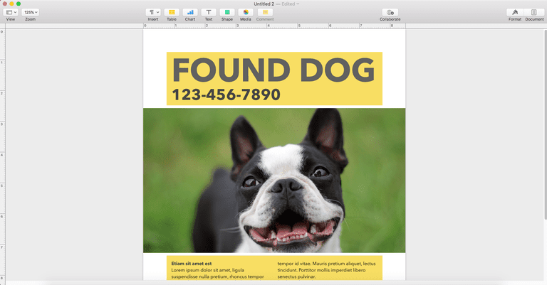 Large Image of Boston Terrier