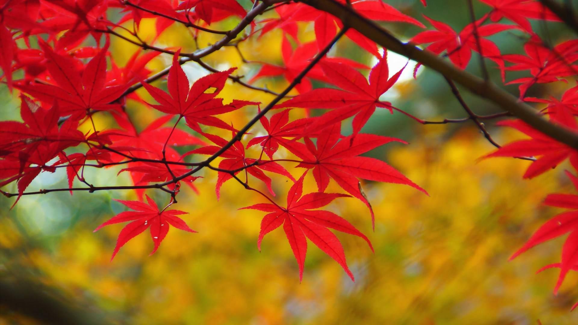 Autumn Landscape by Goodfon