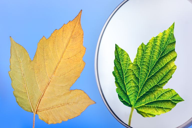 Leaf and mirror