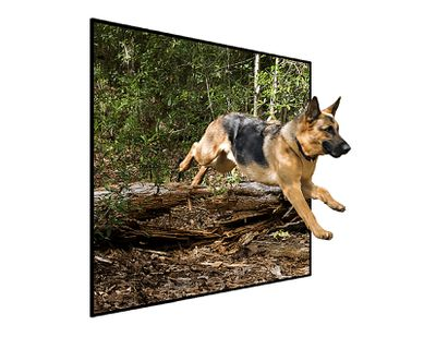 German Shepard jumping out of a television screen demonstrating the out of bounds effect of photoshop