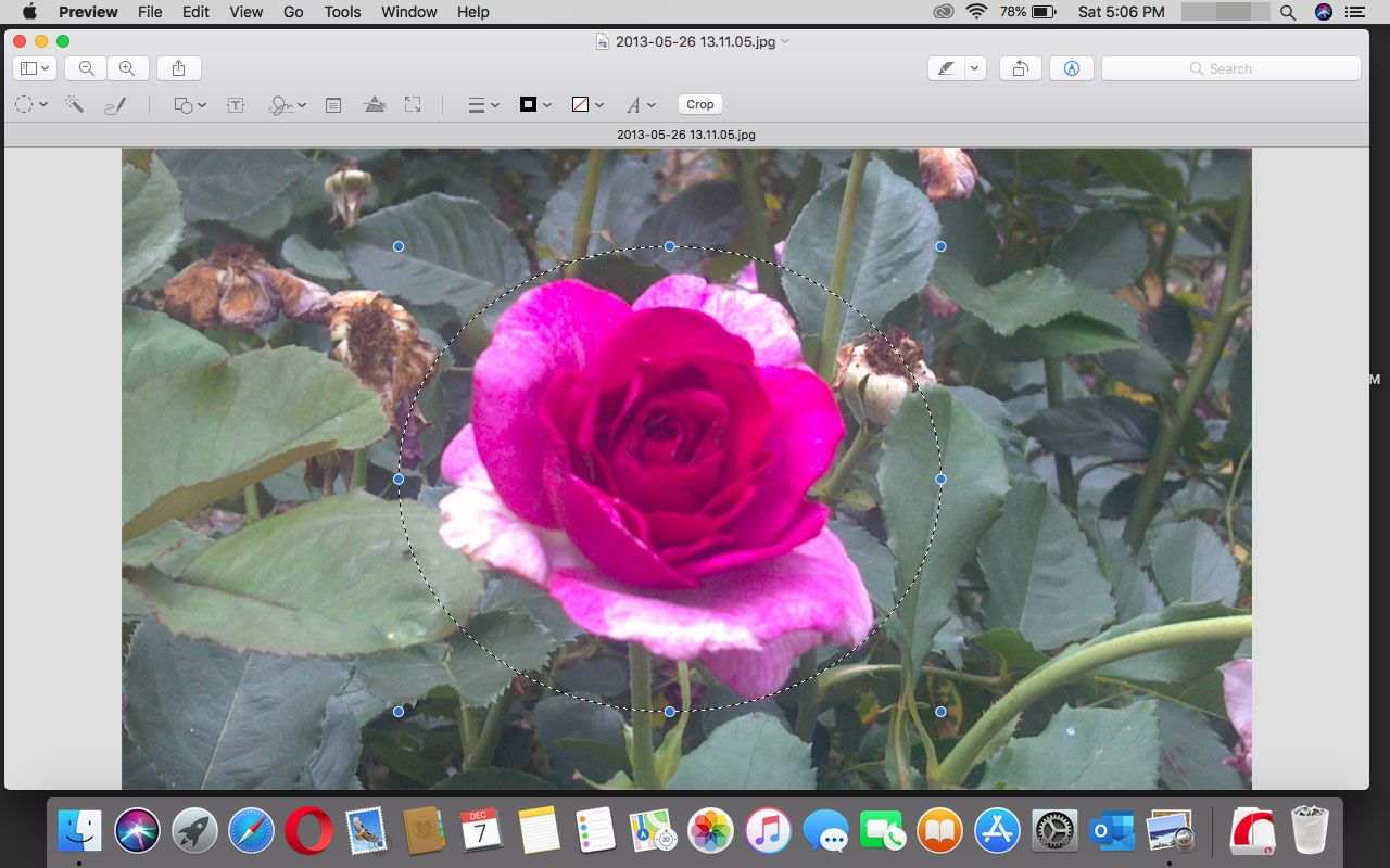Using the elliptical tool in Preview in macOS