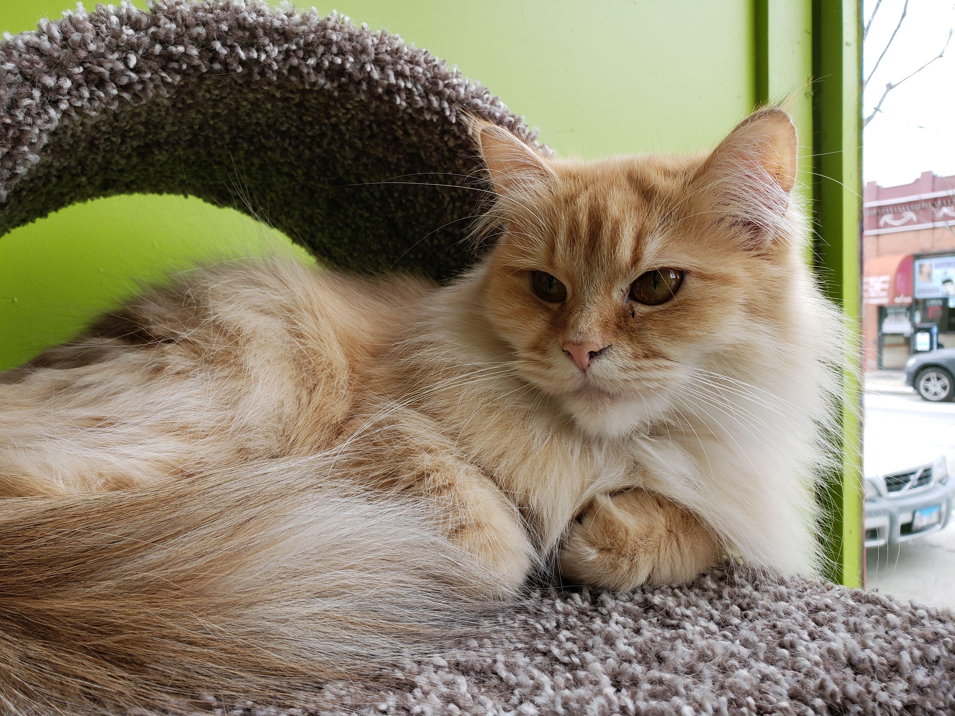 Nokia 7.1 cat photo