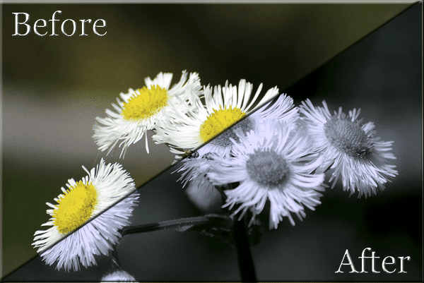 Split tone effect on photograph