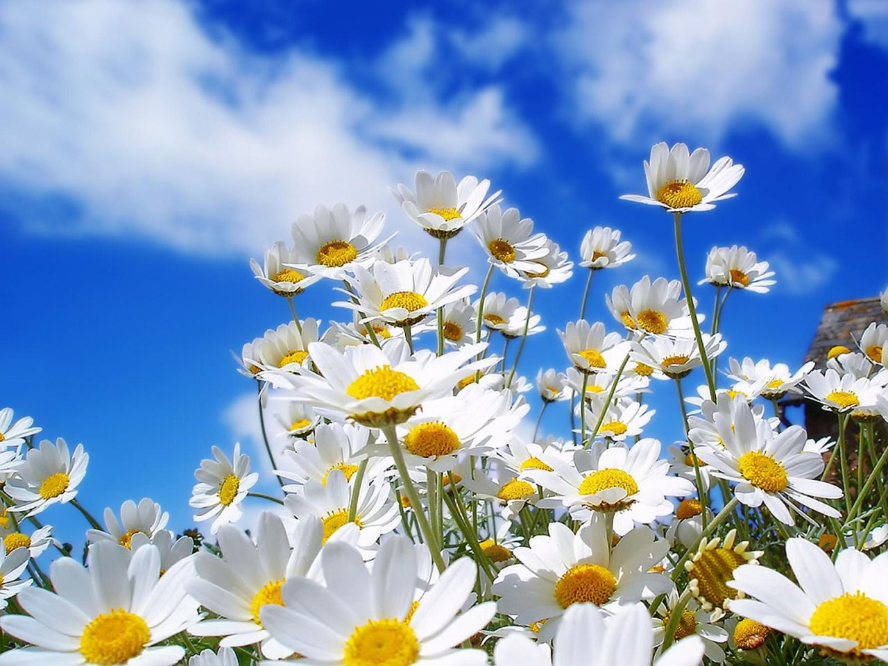 23 Beautiful Free Spring Wallpapers To Bring You Joy
