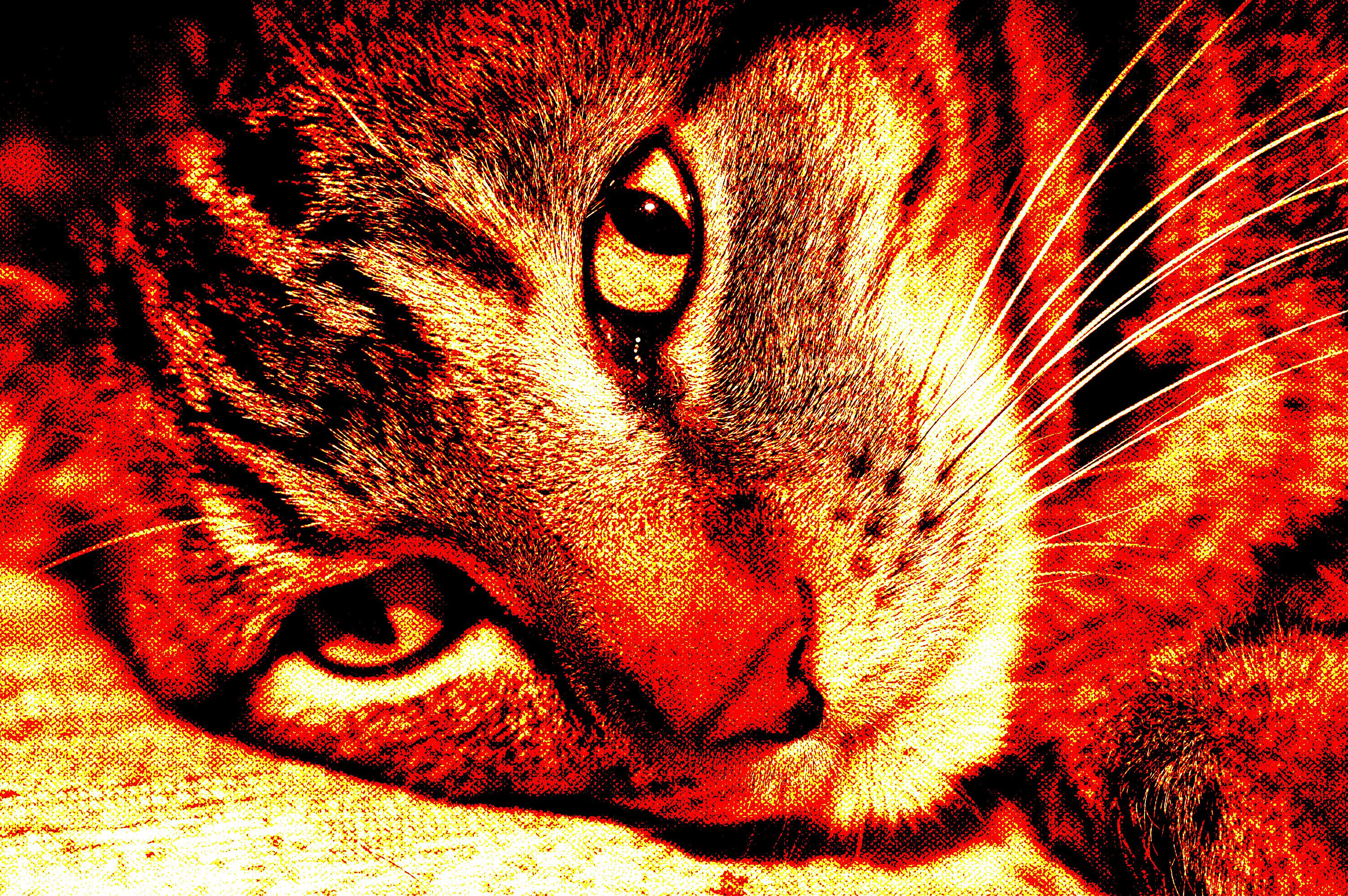 A tabby cat with sepia tones and dithering applied