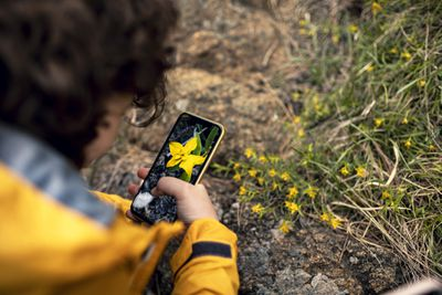 Person taking a photo of a flower with a smartphone