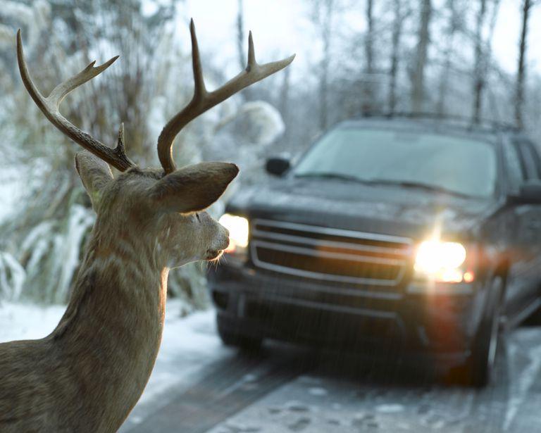 do deer whistles work