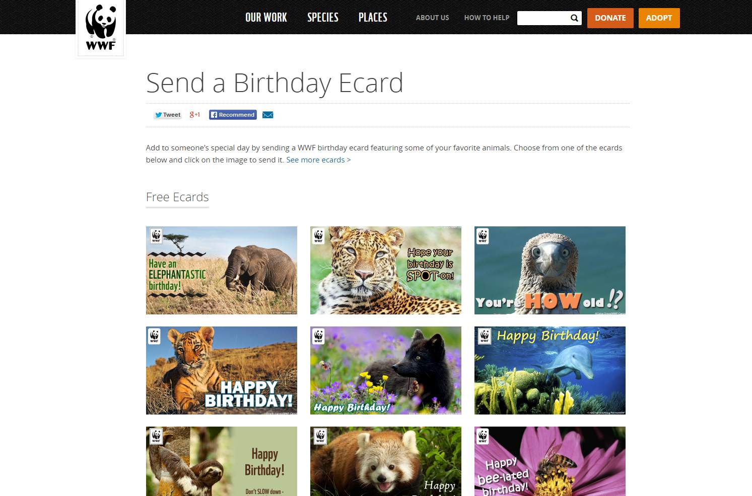 The Free Birthday Ecards At WWF