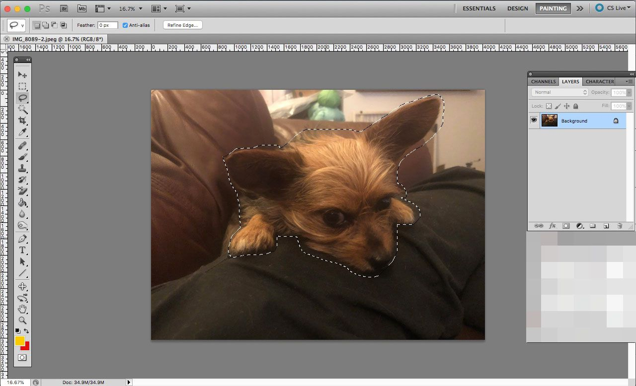 An image open in Photoshop with its subject selected