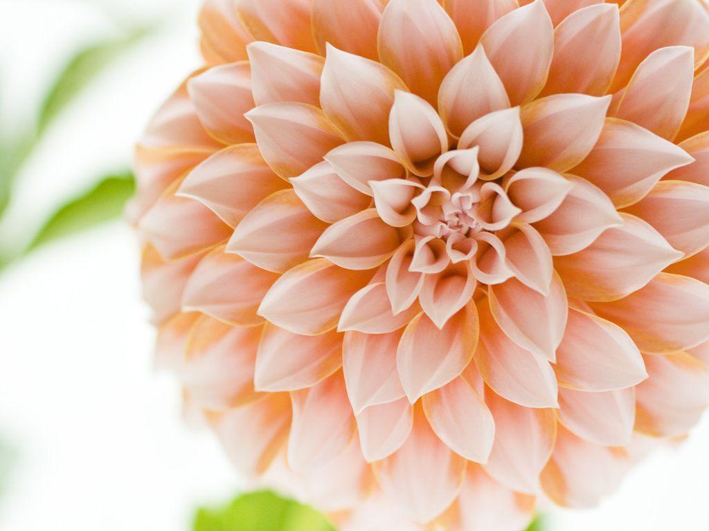 22 beautiful flower wallpapers