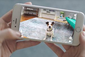 Viewing a pet on a phone