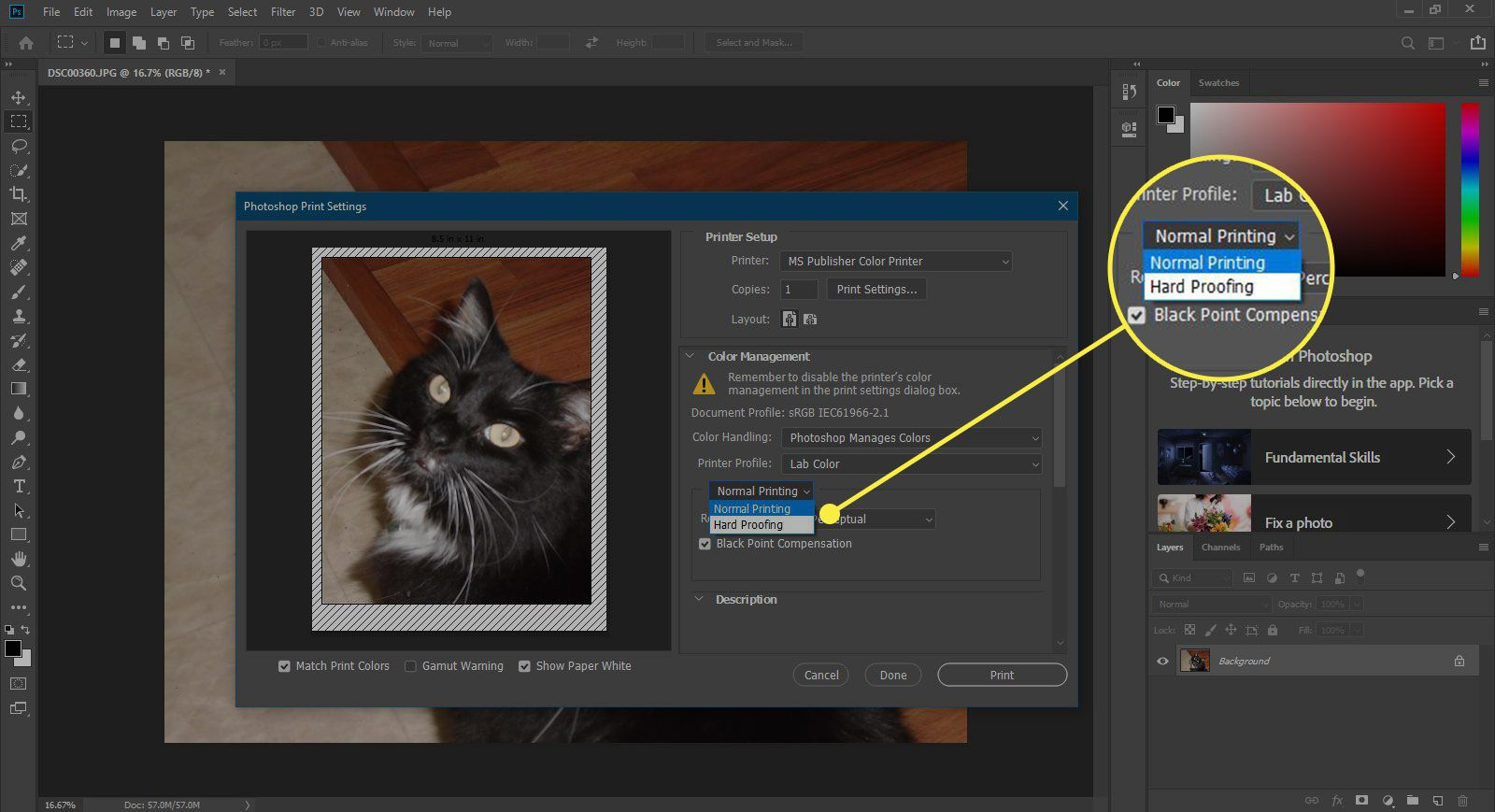 A screenshot of Photoshop's Print window with the Proofing options highlighted