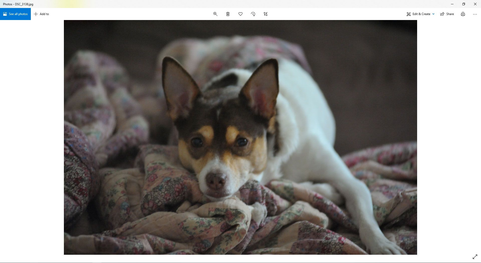An image of a dog has been opened in Windows 10.