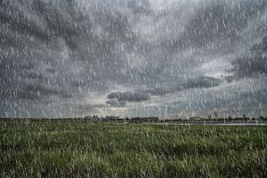 A fake rain effect made in GIMP overlays a grassy field.