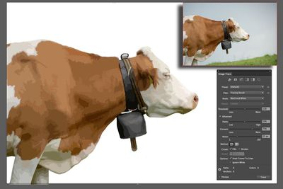 A cow is traced using the Image Trace panel.