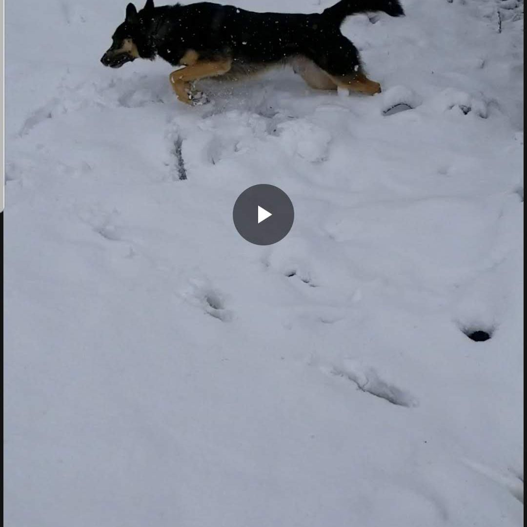 Rotating videos on android doesnt have to be hard a dog runs in a video filled with snow options to rotate or stabilize the ccuart Images