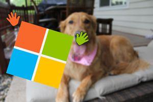 Photo of a Windows logo photobombing a photo of a dog