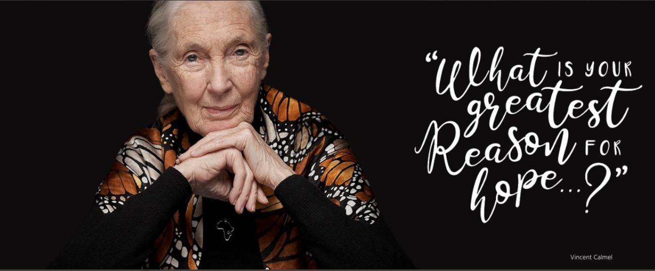 Jane Goodall on Twitter