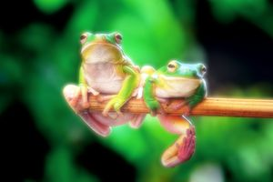 The Orton effect applied to an image of two green frogs hanging on a tree branch.