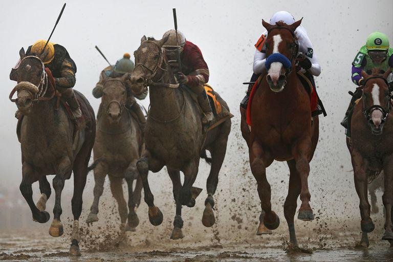 Horses race in the Preakness Stakes.