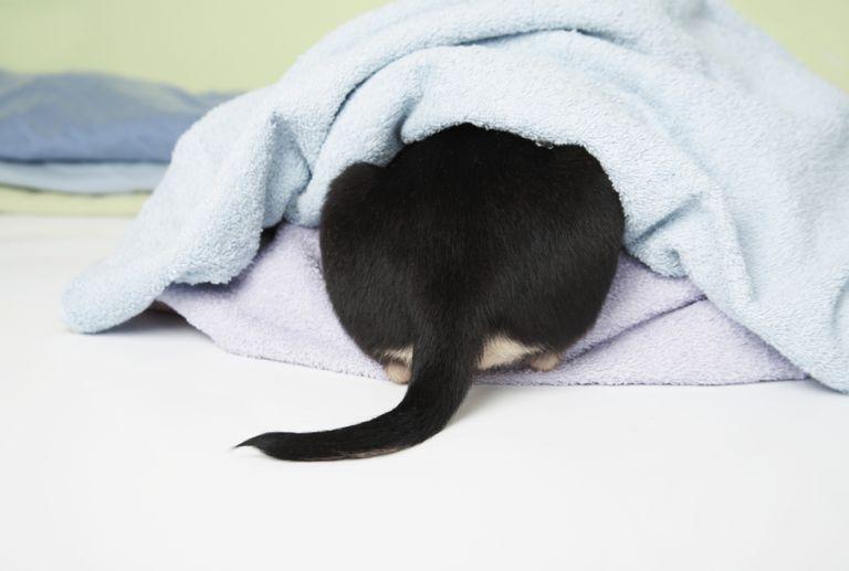 Dog Hiding Under Blankets