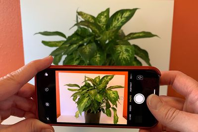 Photo of iPhone camera app open, pointed at a plant in the background