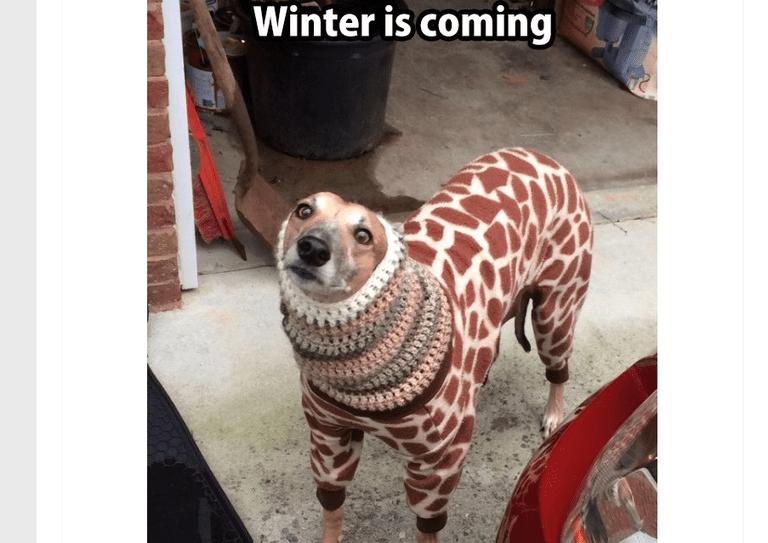 The 21 best dog memes finally this doggo has it figured out solutioingenieria Choice Image