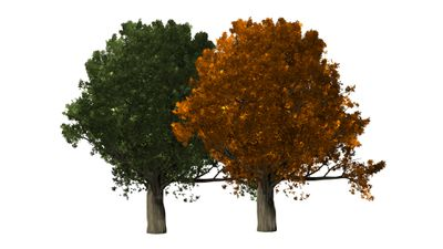 Two trees, one green and one orange.