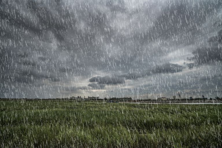 A fake rain effect made in GIMP overlays a grassy field.