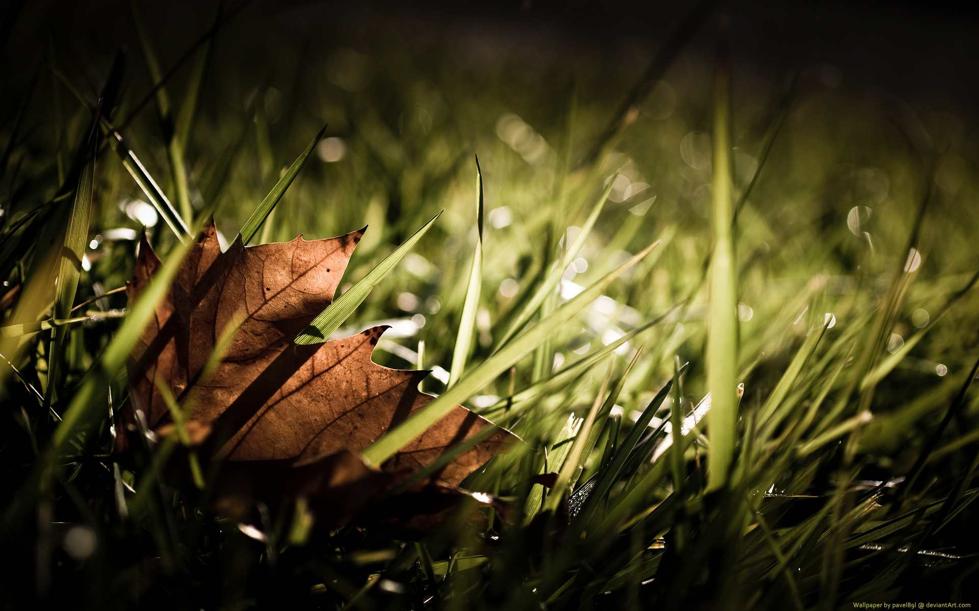 A brown leaf in green grass