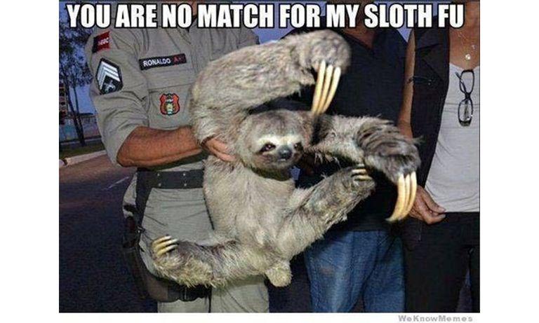 Sloth in custody