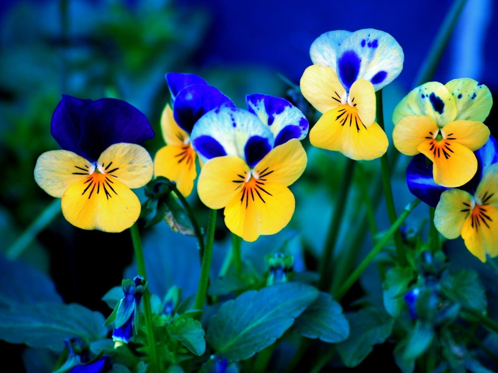 23 Beautiful Free Spring Wallpapers To Bring You Joy