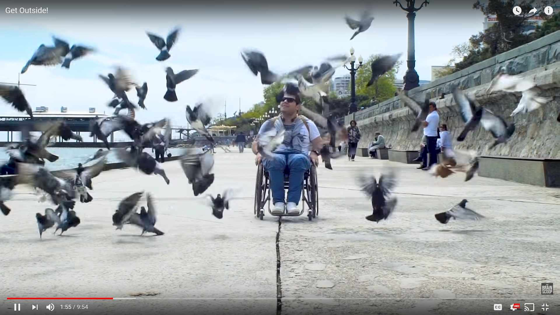 Chair-using man moving through seagulls in The Brain Scoop's