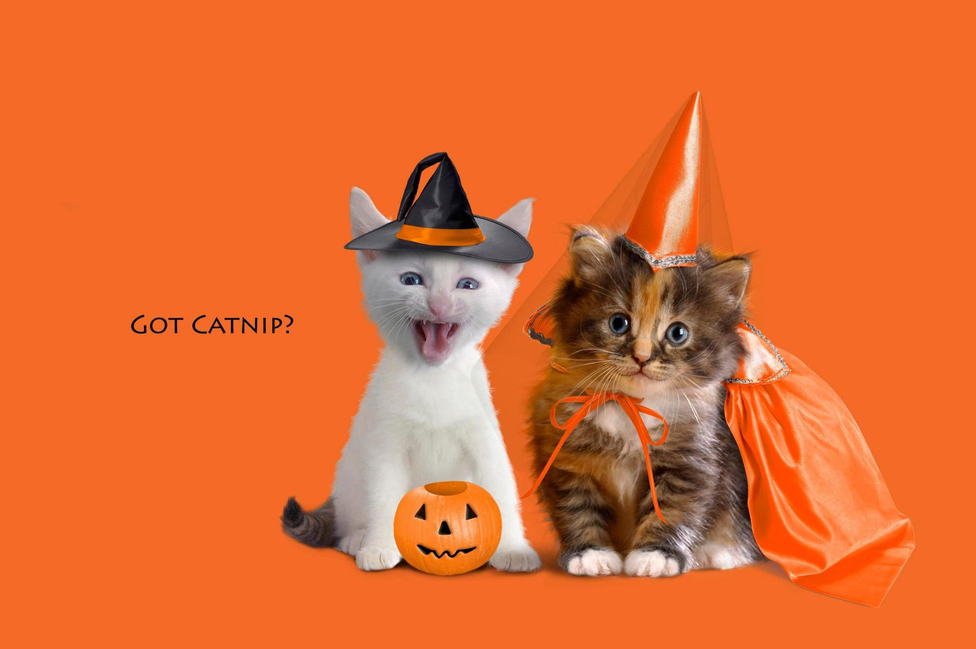 Two kittens dressed up for Halloween with an orange background