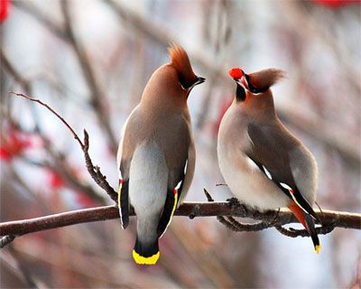 Picture of two birds on a tree branch from DesktopNexus