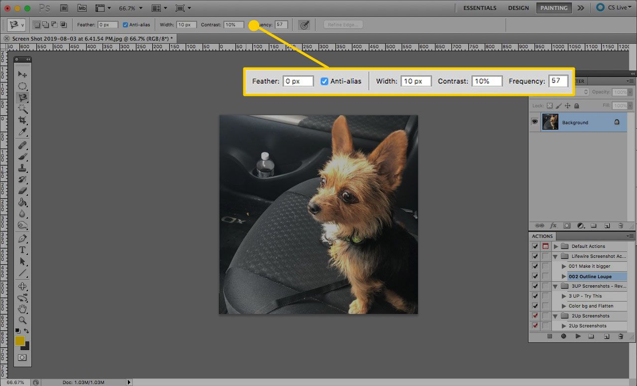 Tool options for the Magnetic Lasso Tool in Photoshop