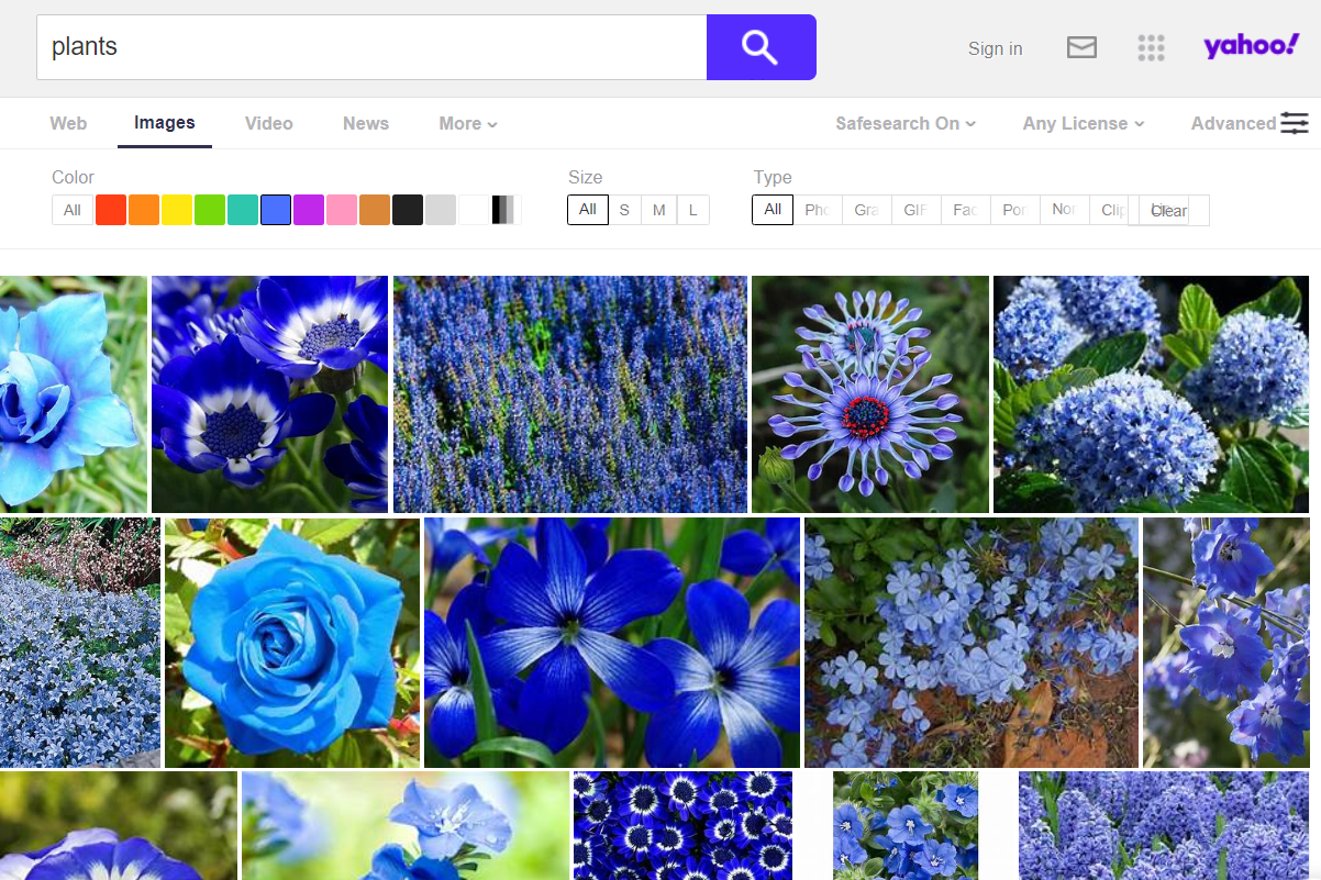 Yahoo advanced search options for images