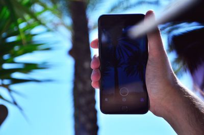 phone taking photo of palm trees.