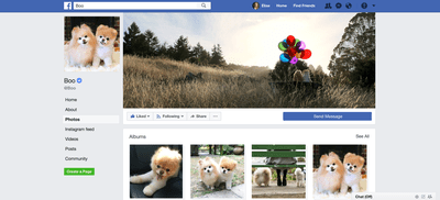Boo the Dog on Facebook