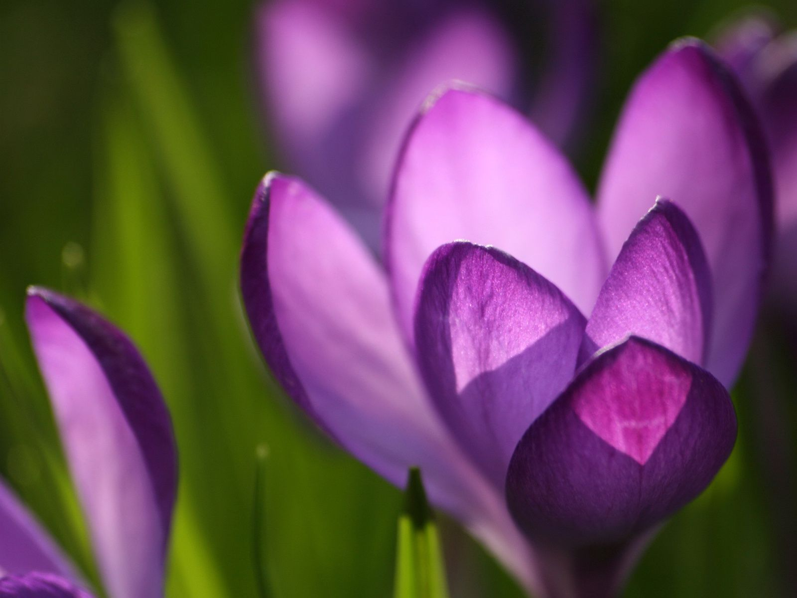23 beautiful free spring wallpapers to bring you joy mightylinksfo