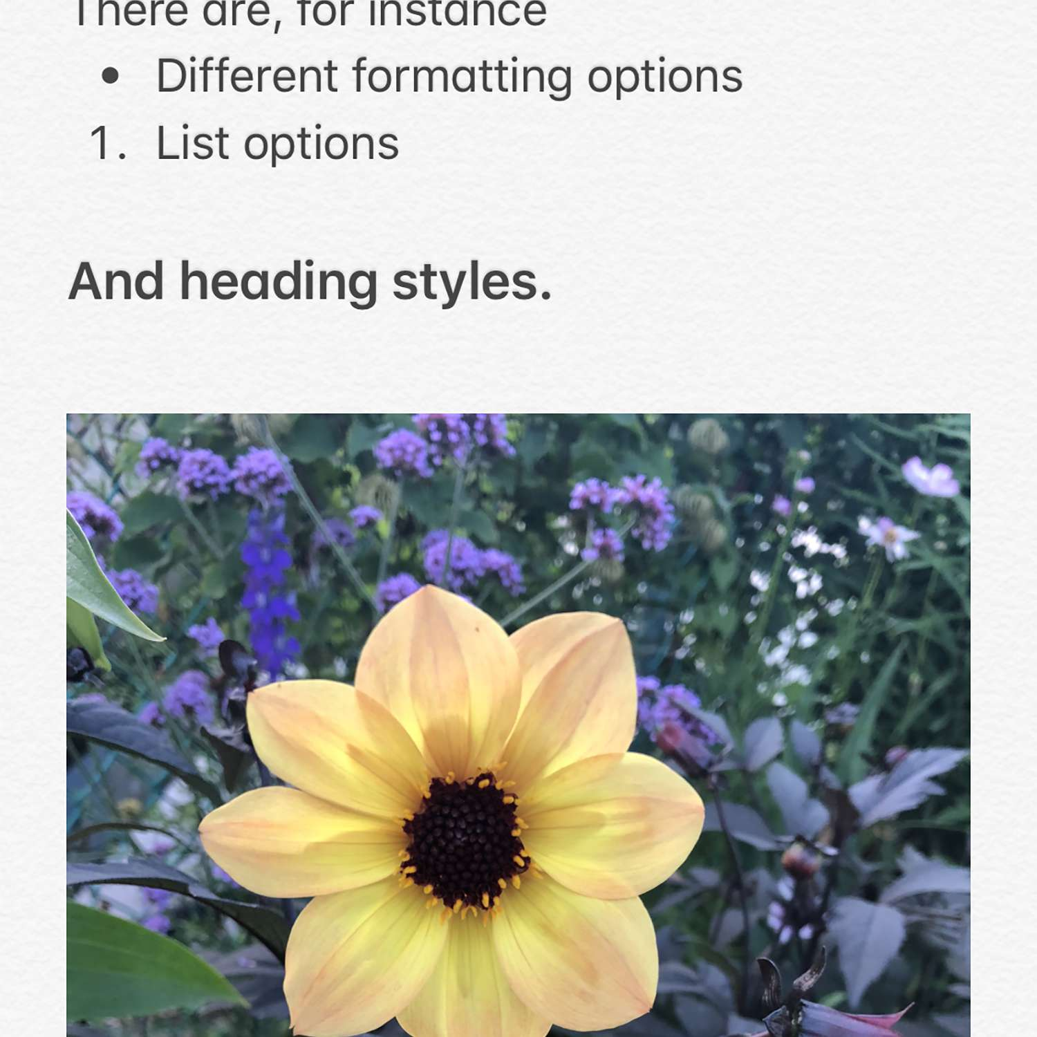 iPhone Notes App: Everything You Need to Know