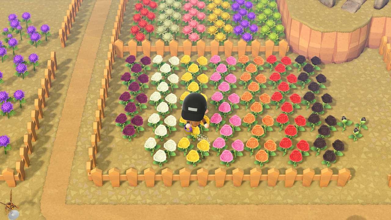 Watering flowers in Animal Crossing: New Horizons