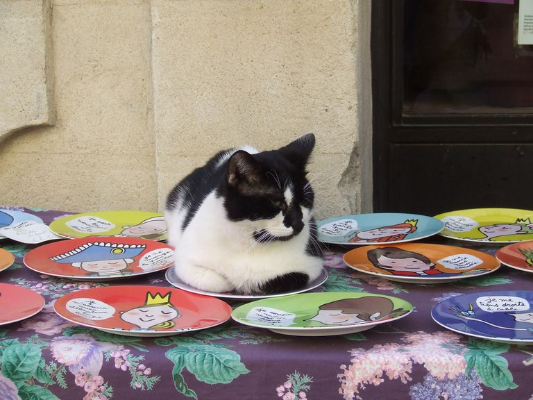 Cat sitting on a plate