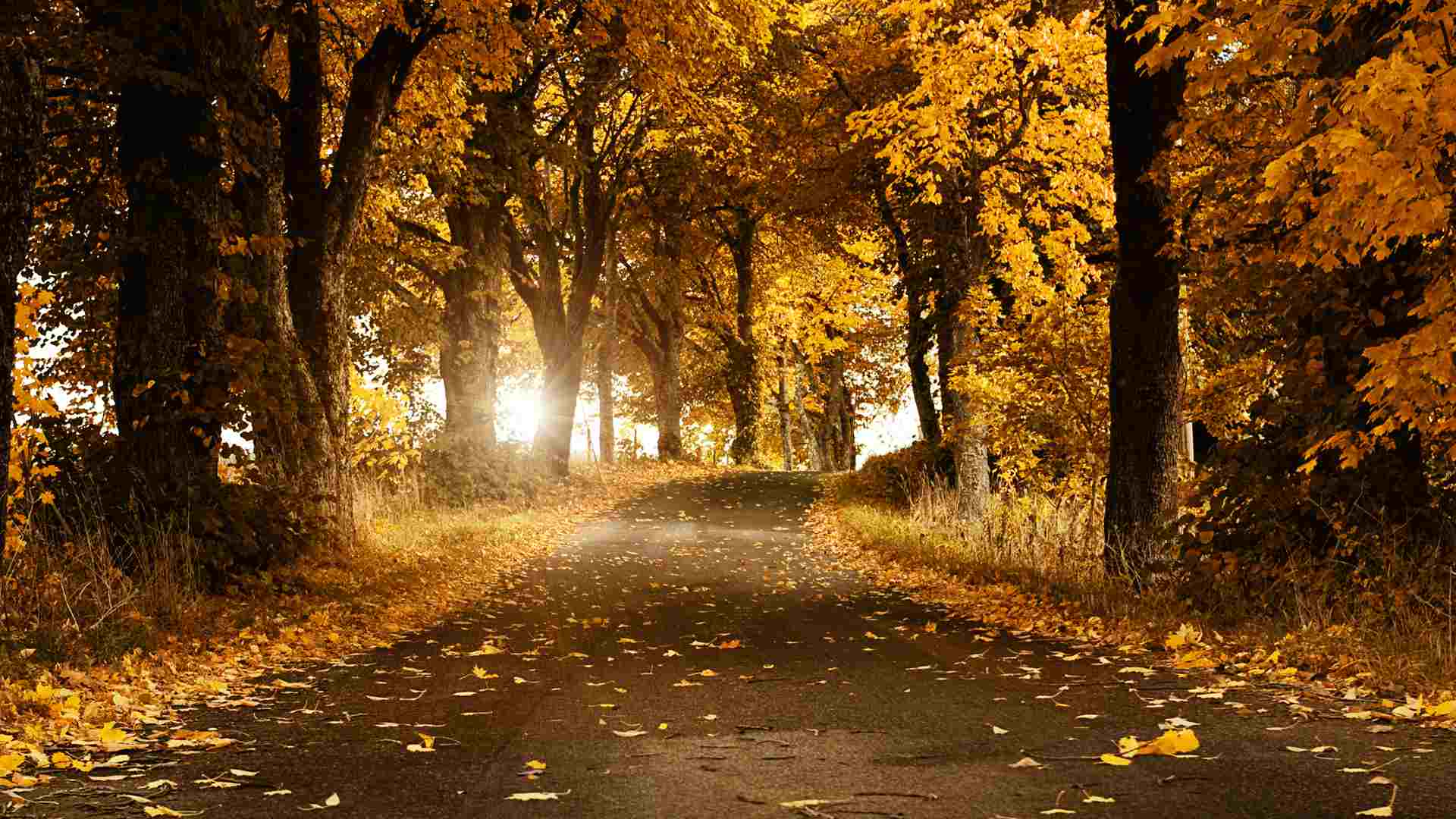 Free autumn wallpaper featuring a road surrounded by fall trees in yellow and orange.