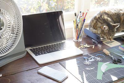 Cat on desktop with MacBook