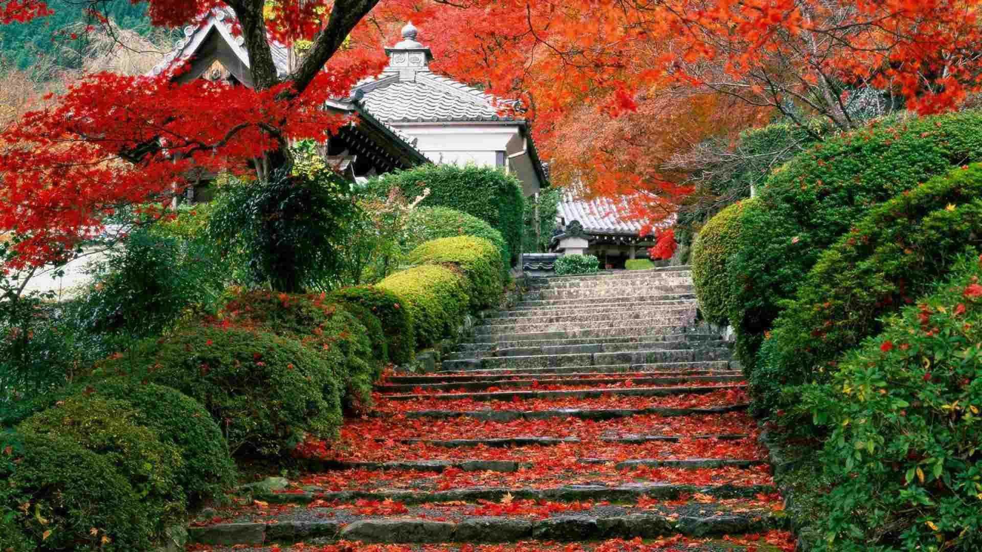 Autumn Steps Bushes By WallpaperStock