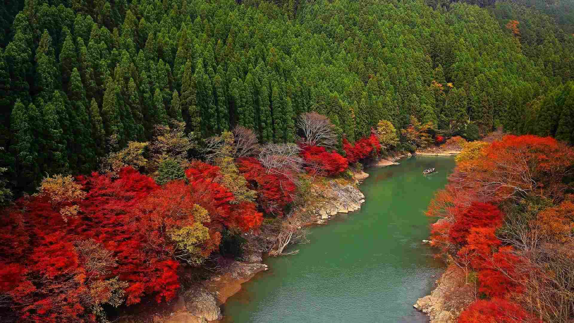 Free autumn wallpaper featuring a river surrounded by red trees.