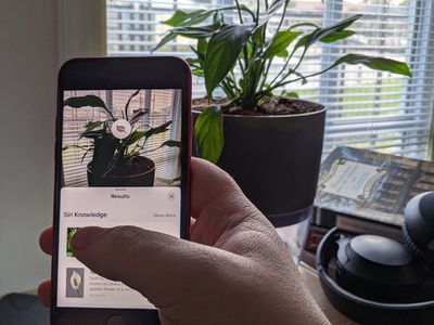 Visual Lookup on an iPhone with a plant.